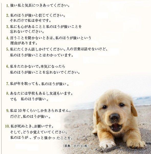 犬の十戒.jpg